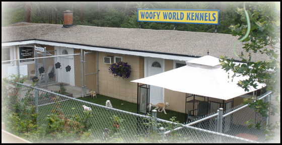 Dog Kennels, Dog Boarding & Dog Daycare, Kelowna, BC