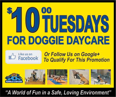 Ten Dollar Tuesday Doggie Daycare