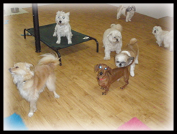 Indoor Play Area - Small Dogs