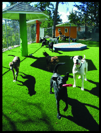 Large Dog Play Area