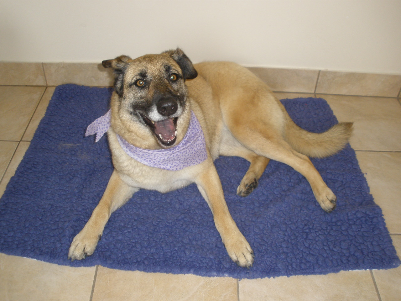 Honey - Our Foster Dog