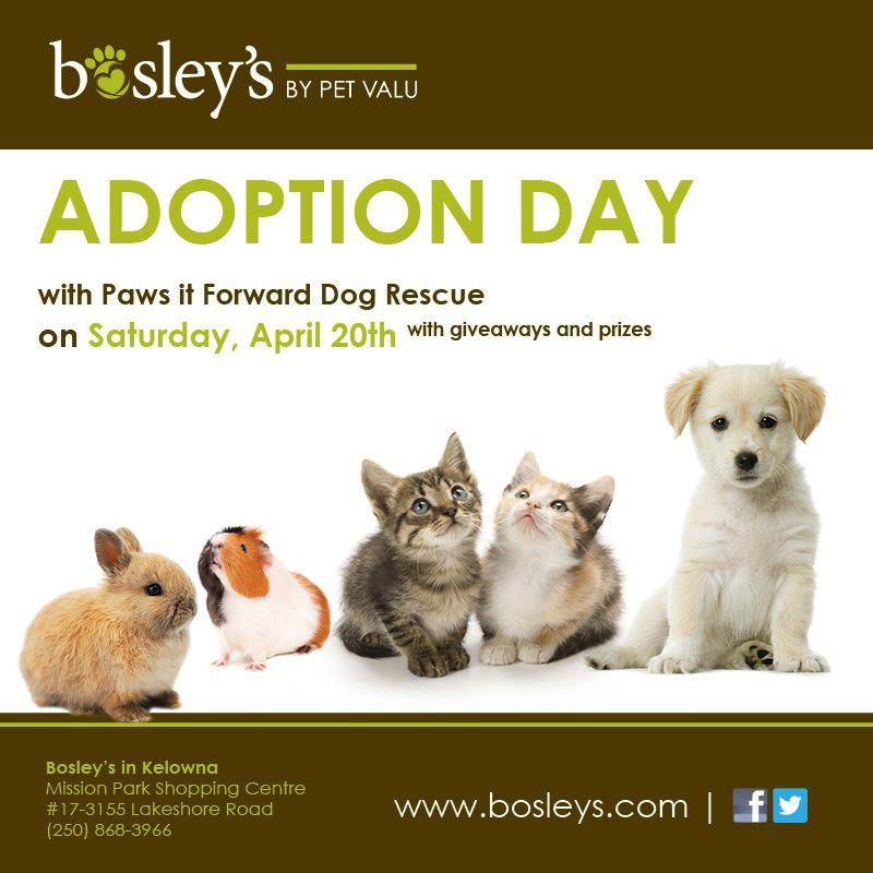 Paws It Forward Adoption Day at Bosley's