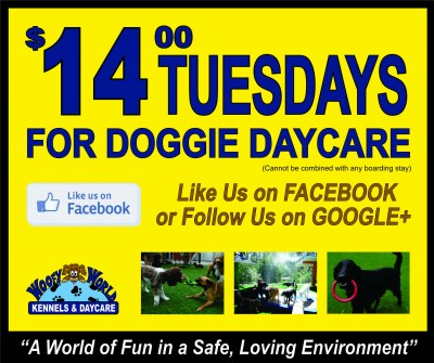 dog daycare kelowna