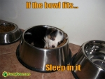 funny-dog-picture-if-the-bowl-fits.jpg