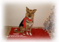 View the album Christmas & New Year Pet Portraits