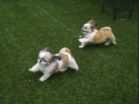 View the album Outdoor Play Area - Small Dogs