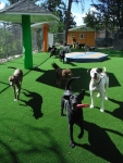 View the album Outdoor Play Areas - Large Dogs